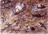 """Прибытие очередного блока лунной базы """"Звезда"""""""